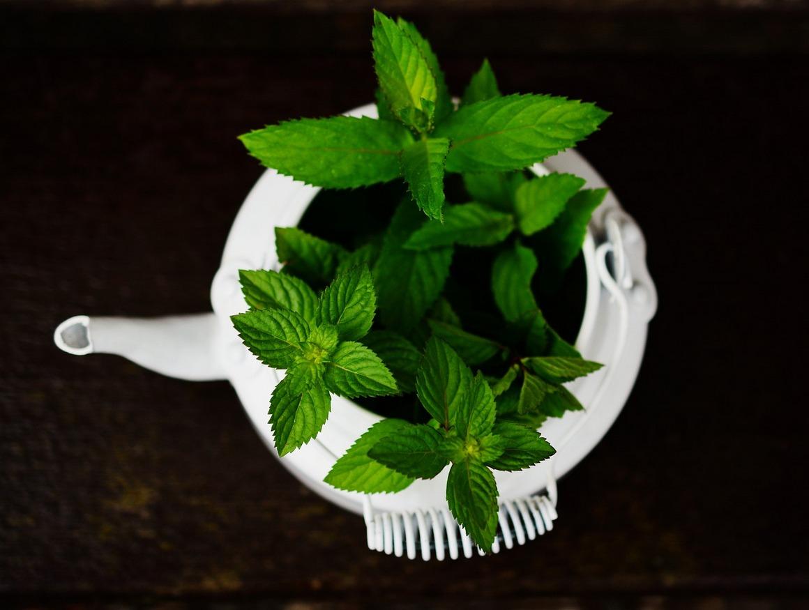 Herbatka ziołowa w diecie dziecka